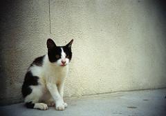 猫背は万病のもと。