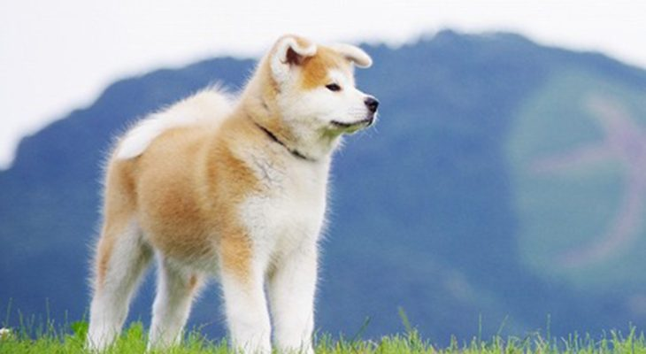 ヤギさん犬4